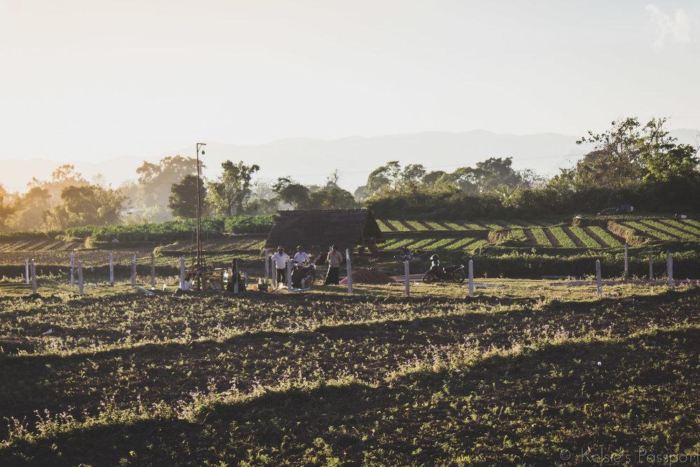Burmese_Train-24.jpg
