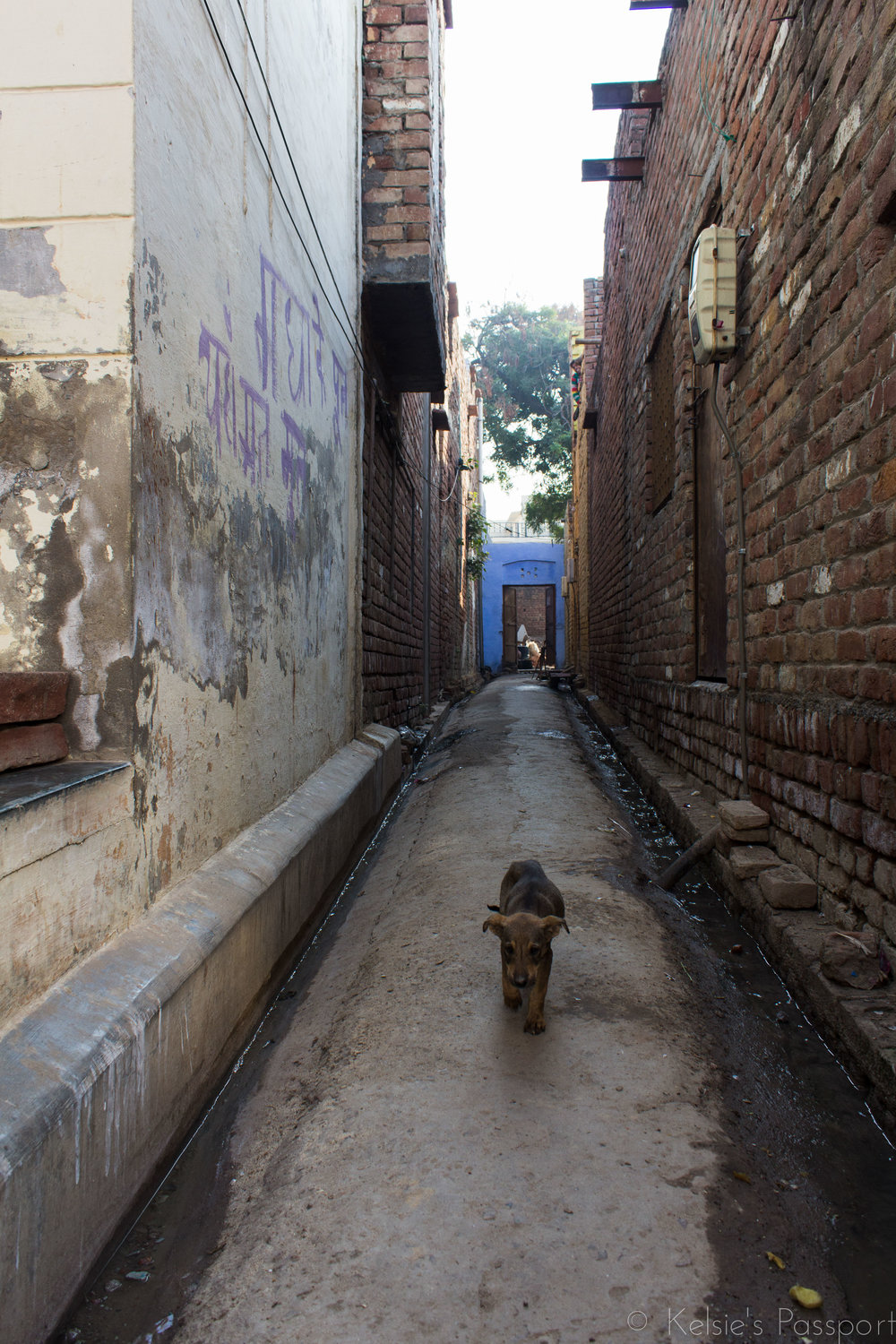 Dog-lovers beware. Strays are everywhere and their sad skinny faces will break your heart.
