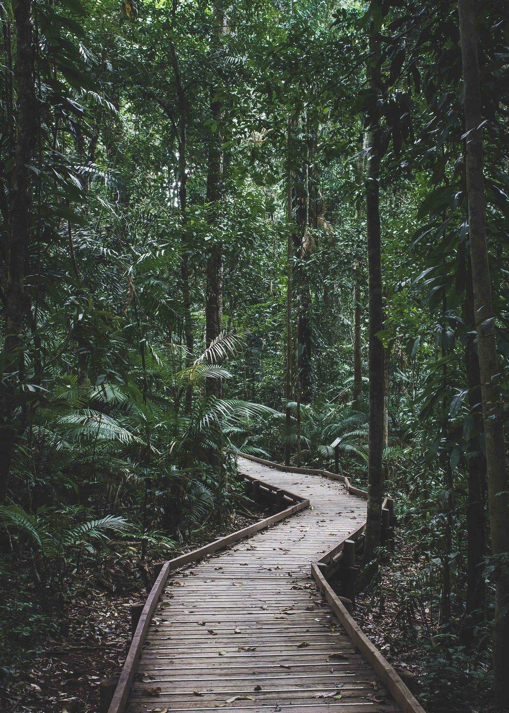 5x7-Into the Jungle-Small.jpg