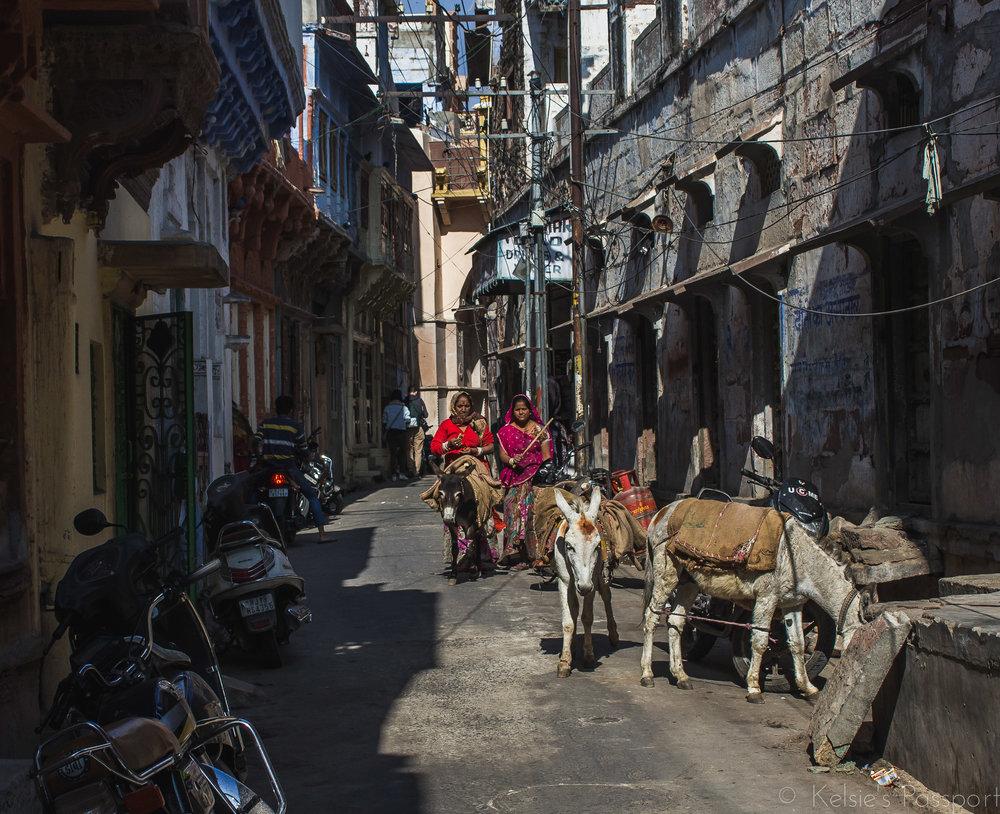 Mule herders in Jodhpur.