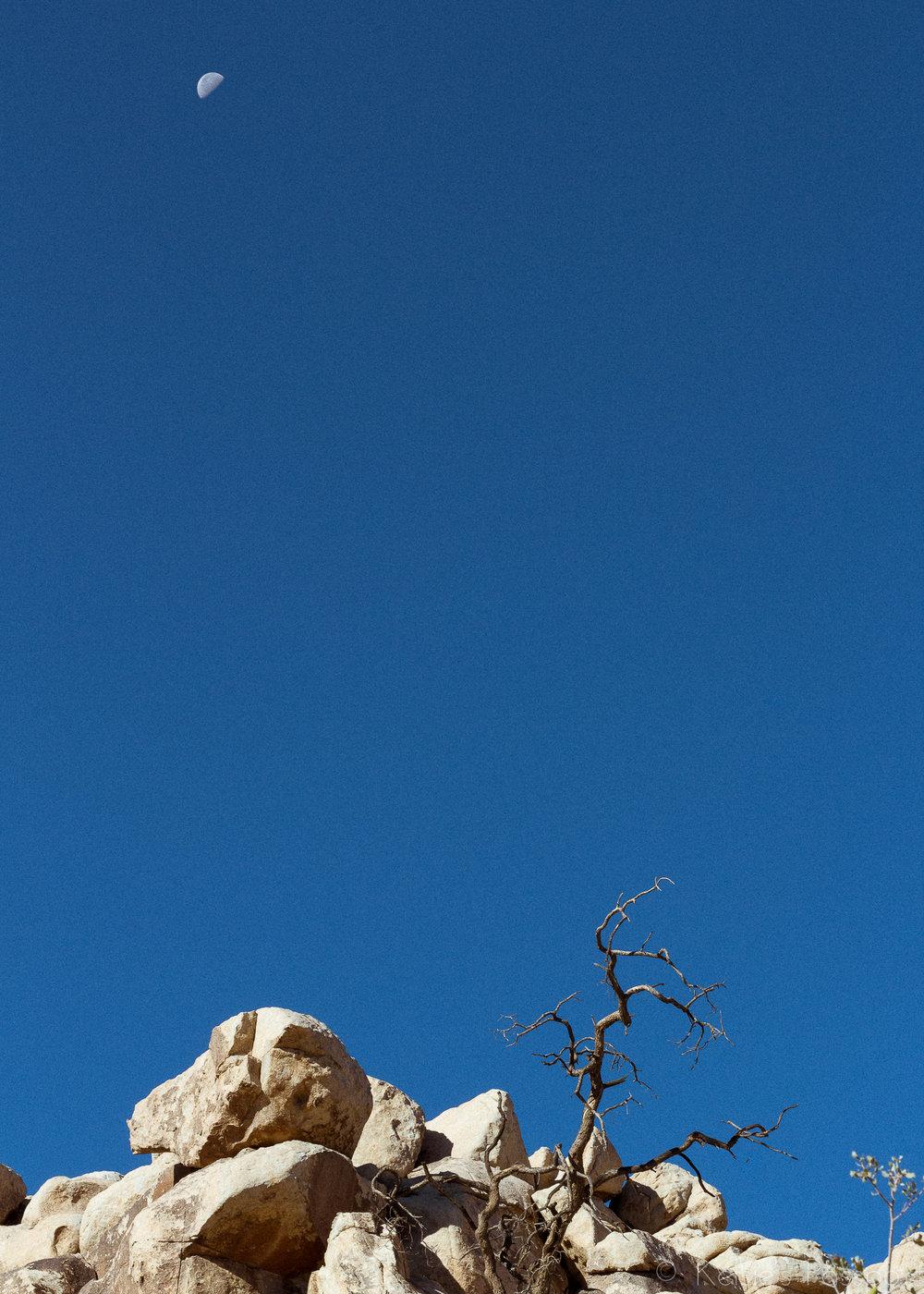 Joshua Tree National Park 4