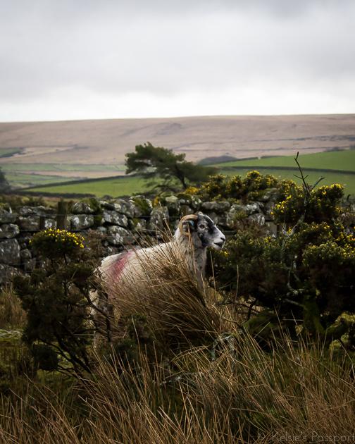 Dartmoor_England-8.jpg