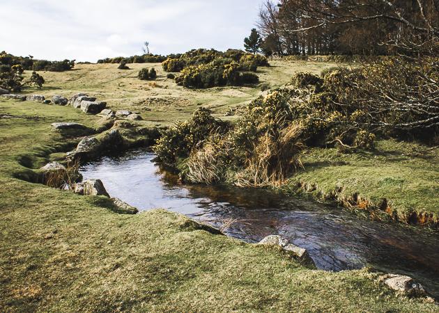 Dartmoor_England-25.jpg