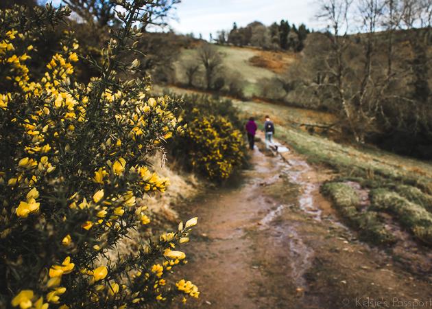 Dartmoor_England-30.jpg