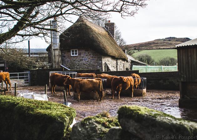 Dartmoor_England-33.jpg