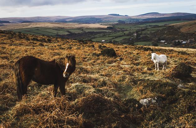 Dartmoor_England-39.jpg
