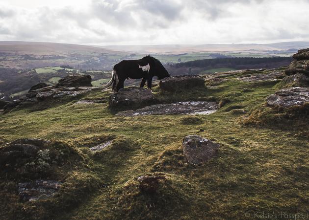 Dartmoor_England-42.jpg