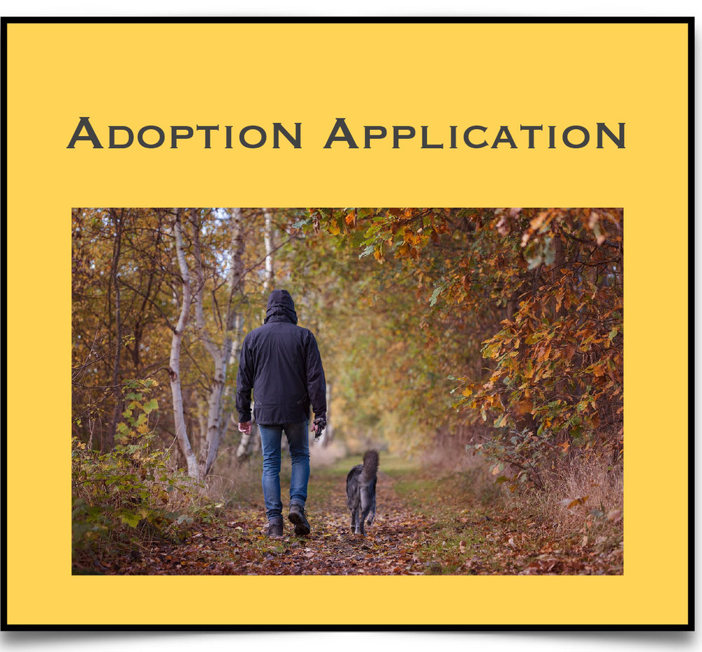 Adopt Application.jpg