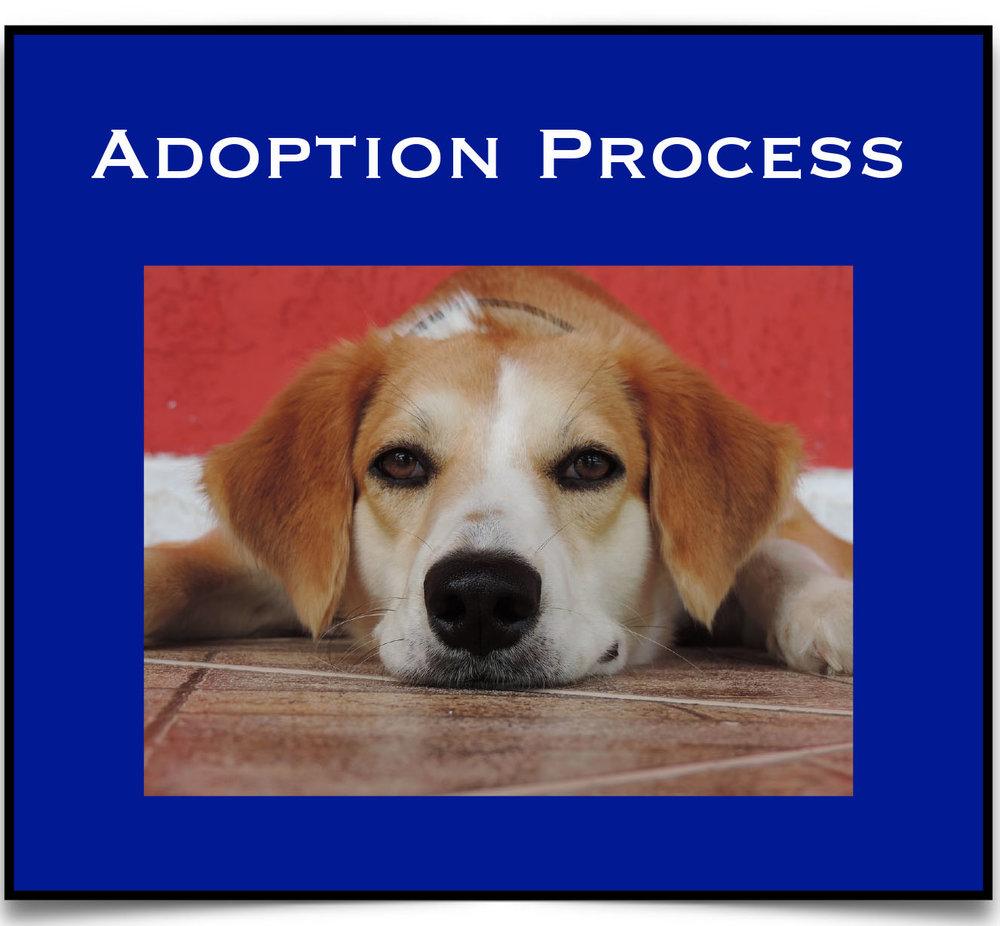 Adopt Process.jpg