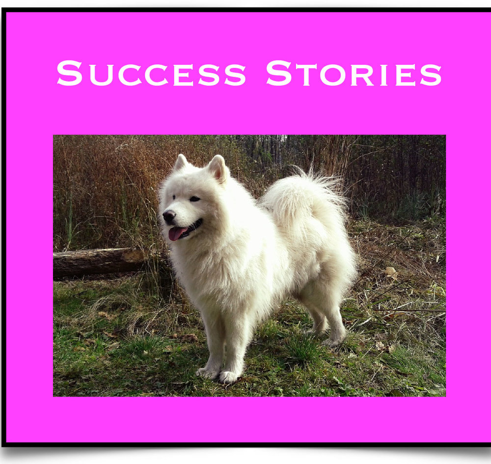 Success Stories.jpg