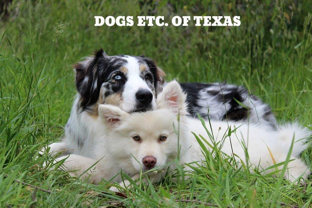 dogs-1790046_1280.jpg