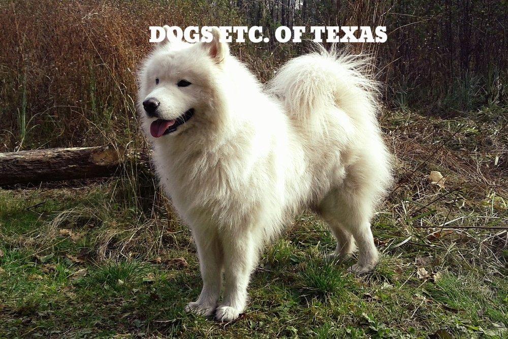 dog-1805722_1280.jpg
