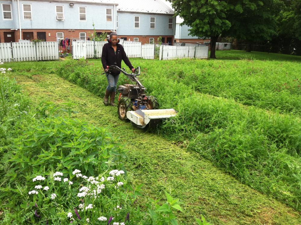 Jennifer Minor, UACC Farm Apprentice, mows the cover crops at 6th Street.