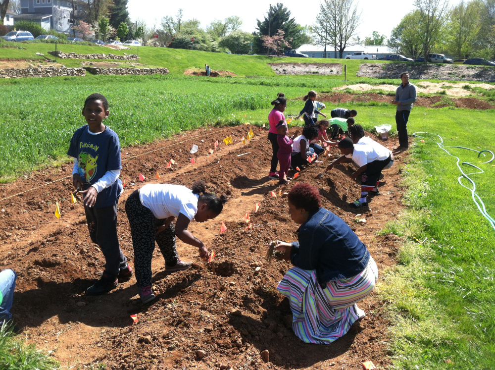 In April, young people from the Friendship Court after school program planted over 100 strawberry plants.