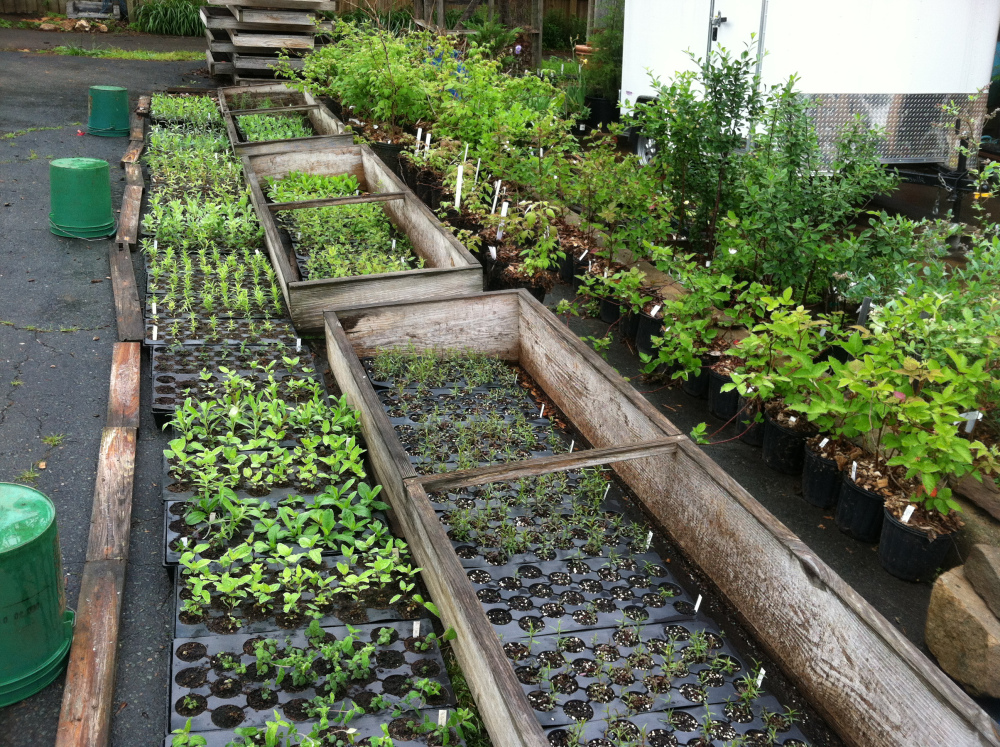 Native plants in the foreground and berries in the back await the ideal planting day.