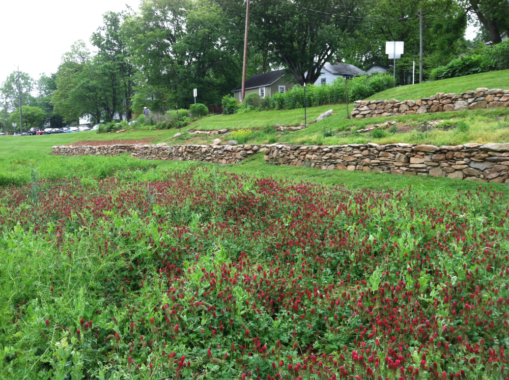 Crimson clover in full bloom in the foreground, our almost finished terraces in the middle, and a thriving native plant community at the top.