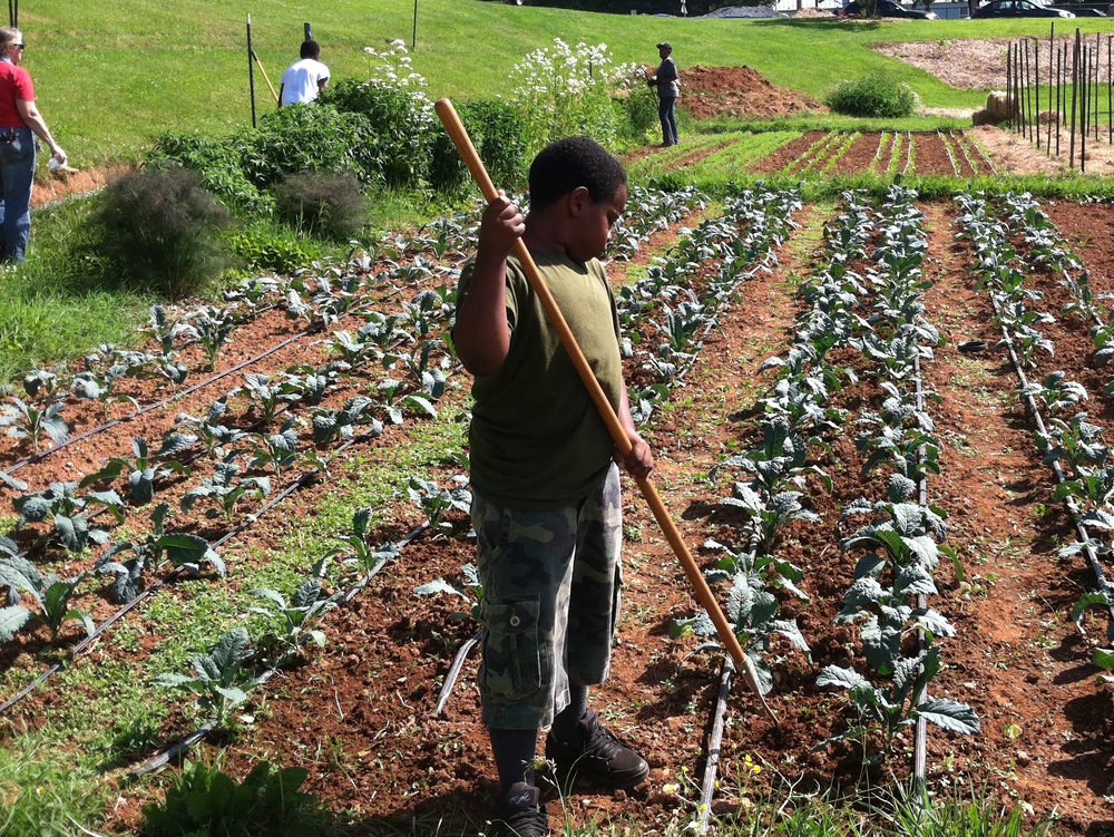 Johnny volunteers to cultivate the kale at Friendship Court - June 2015