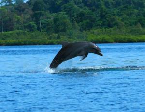 TOUR 1  Bahía de los Delfines, Cayo Coral, y Isla Zapatilla Price: $25.00 and $10.00 for park entrance