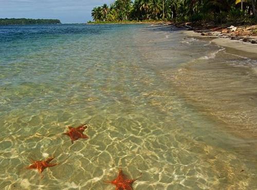 TOUR 3  Boca del Drago, Playa Estrella, y Isla Pájaro Price: $25.00