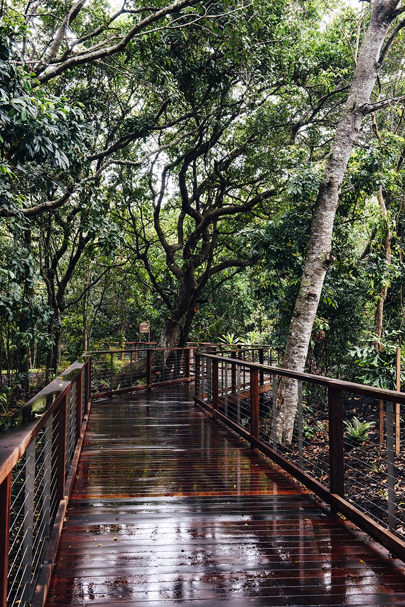 Elements_Walkway.jpg