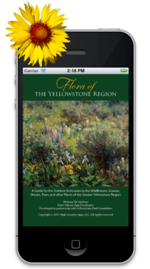 FLORA OF THE YELLOWSTONE REGION  |  A GUIDE TO  WILDFLOWERS, GRASSES, SHRUBS, TREES OF THE GREATER YELLOWSTONE REGION.