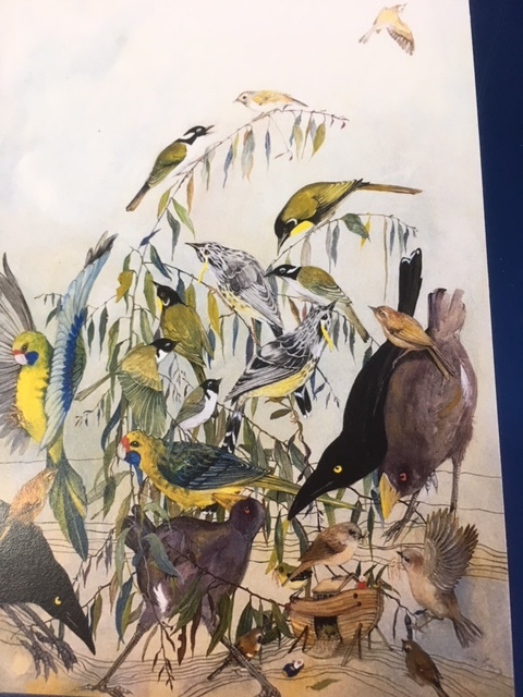 from large acrylic painting, two of each of the 12 endemic birds, available in singles or part of a pack  of five $6/$25