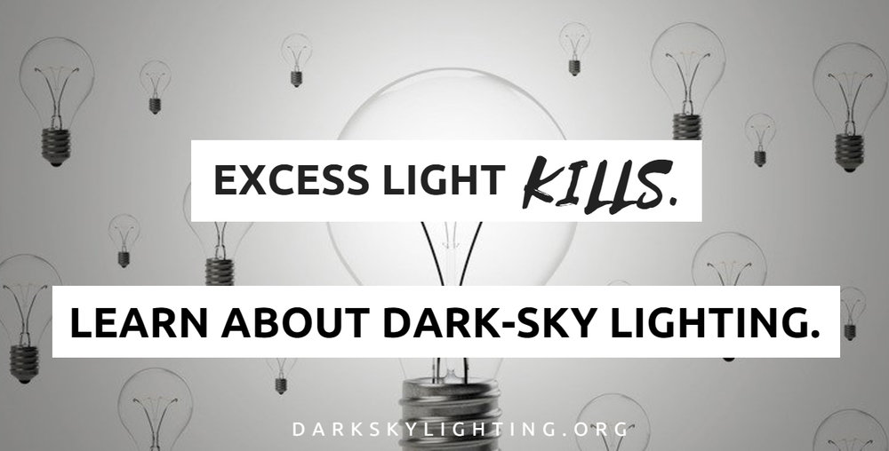 Excess Light KILLS.