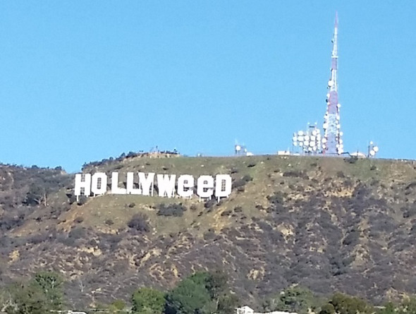 Hollyweed_Photo_Los-Feliz_February-2017-copy-2-590x445.jpg