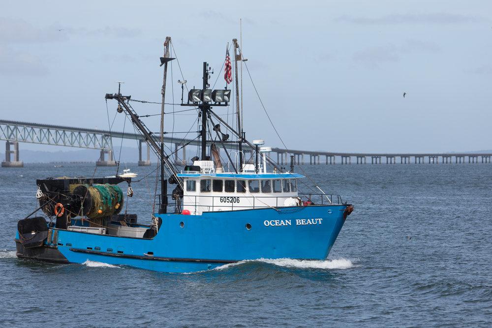 1709-Ocean Beaut-1033.jpg