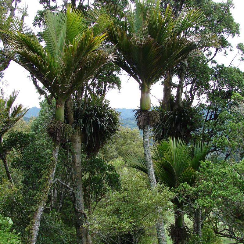 nikau-background.jpg