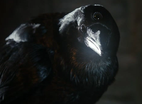 Three-eyed_raven.png