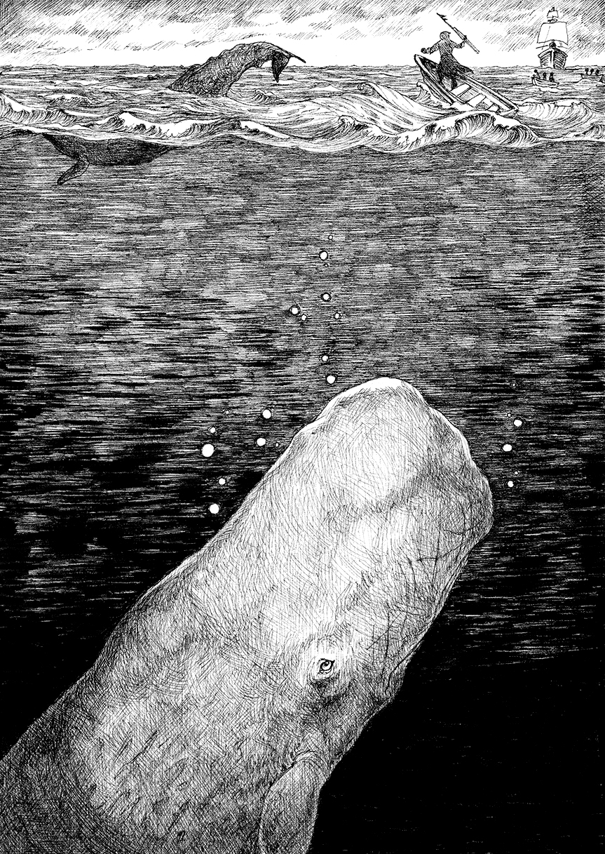 Moby Dick dilemma_crop_150dpi.jpg
