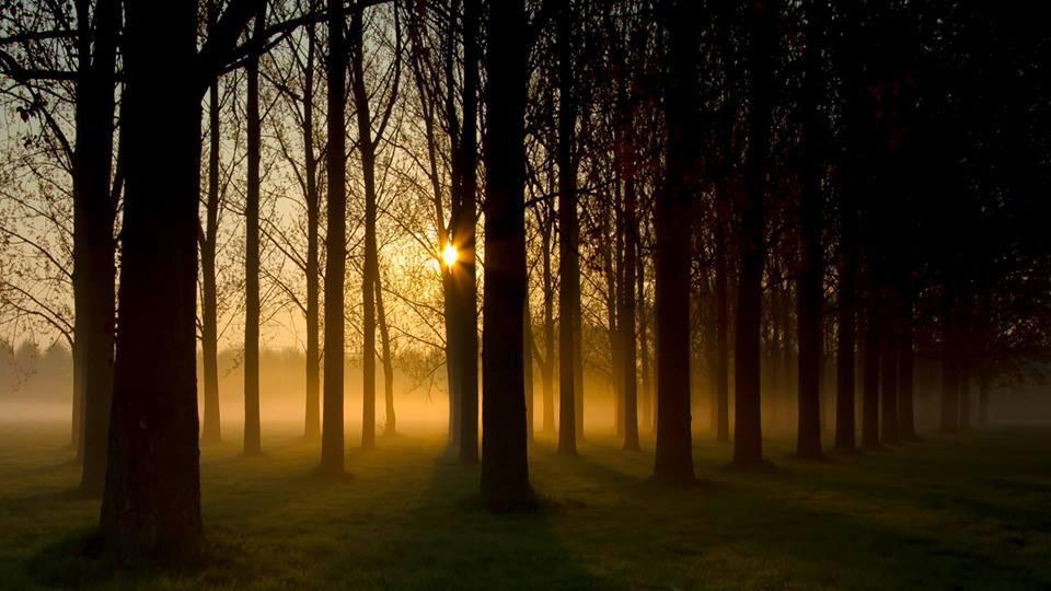 spring fall dawn forest.jpg