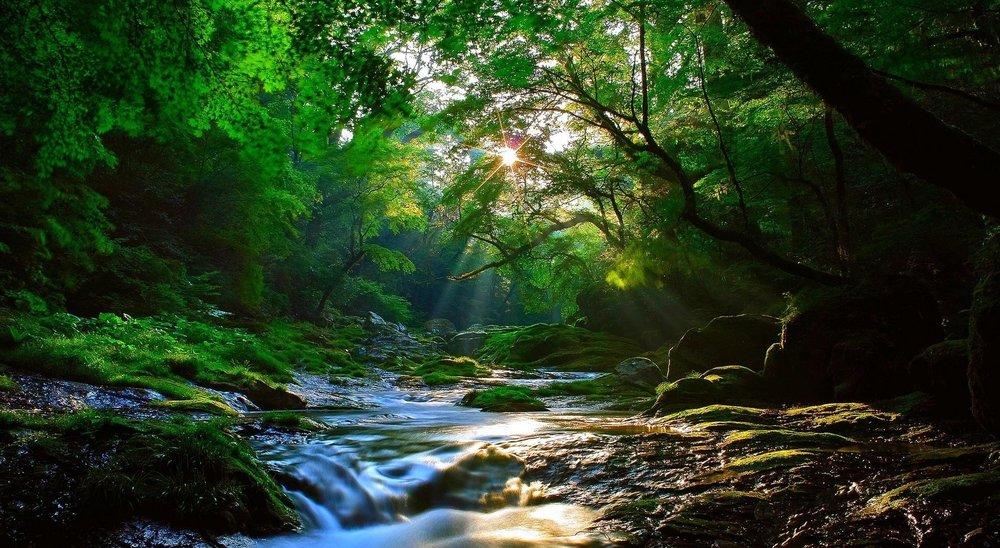 summer deep green woods stream.jpg