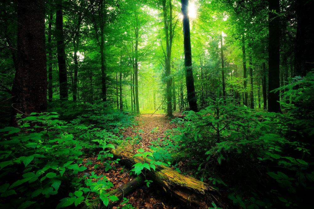 summer woods deep green.jpg