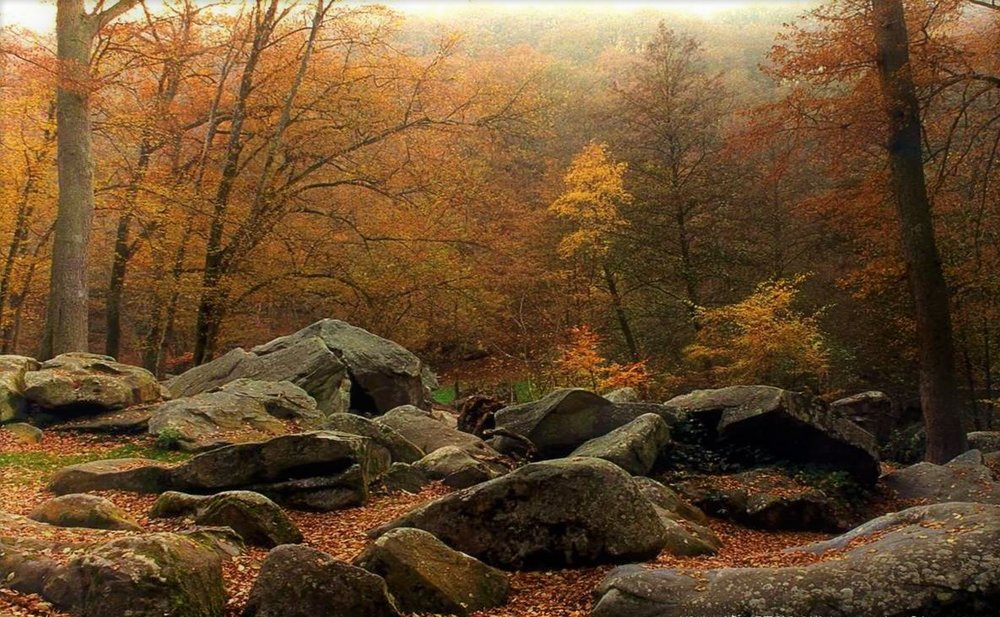 late autumn stones forest.jpg