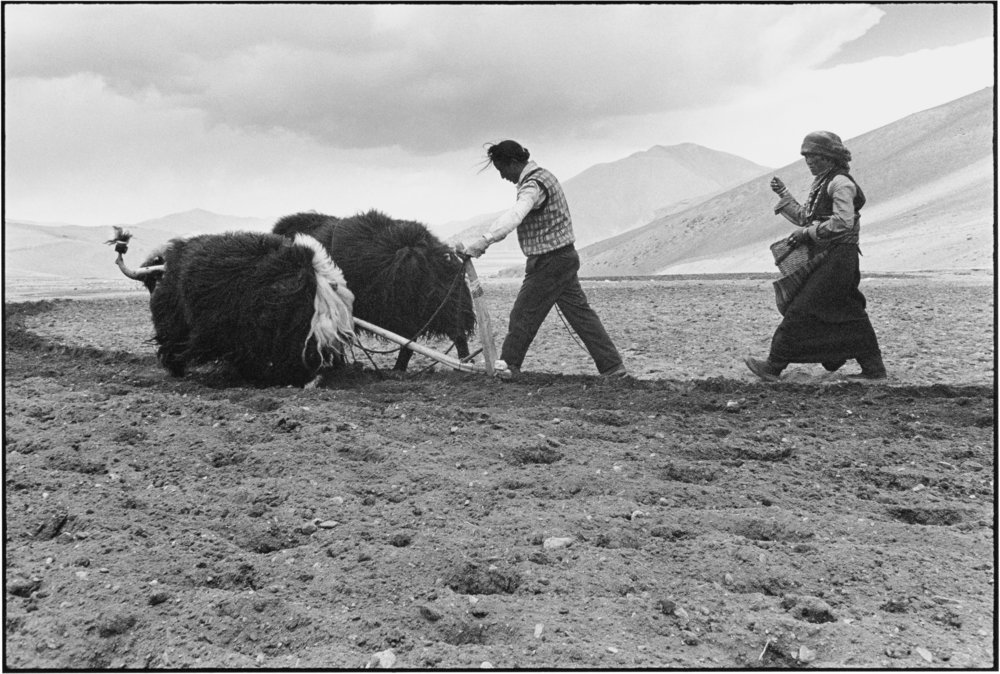 A Husband and Wife Sowing the Fields, Tibet