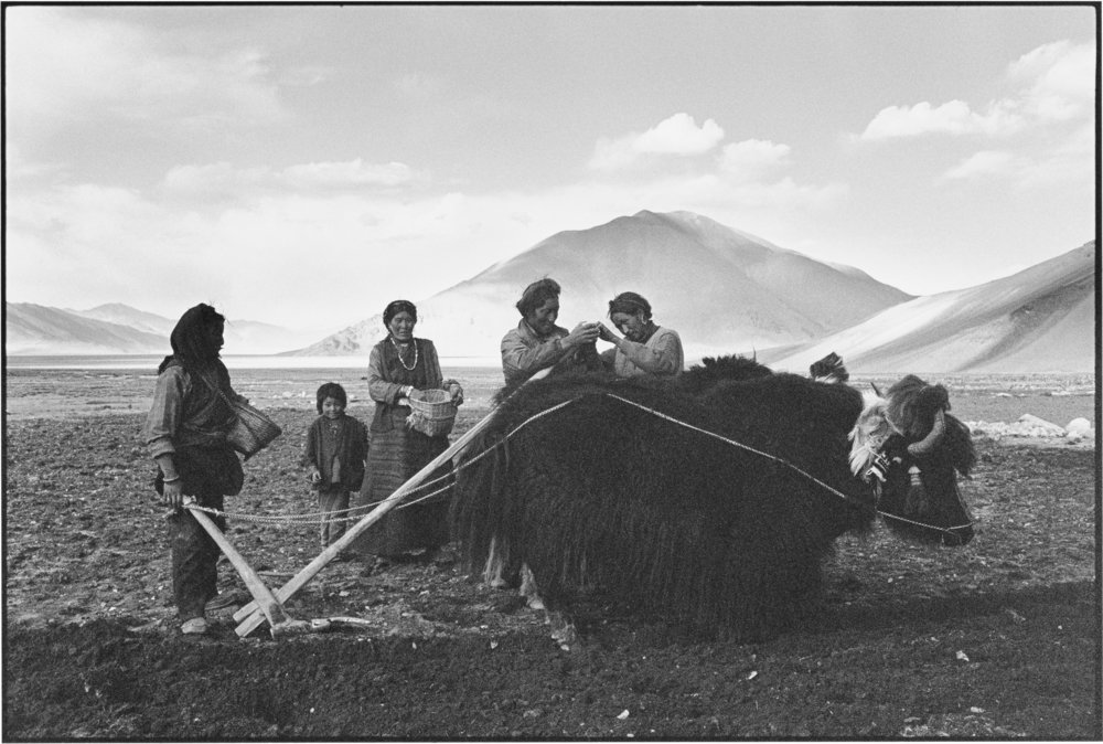 Mending the Plough, Tibet