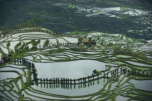 The rice paddies of Yuanyang, Yunnan Province