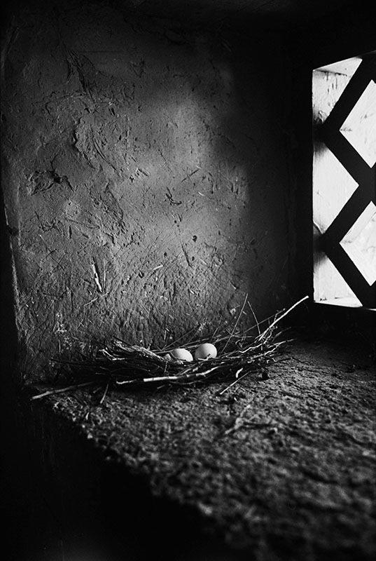 Wild pigeon eggs on the temple windowsill, Tibet