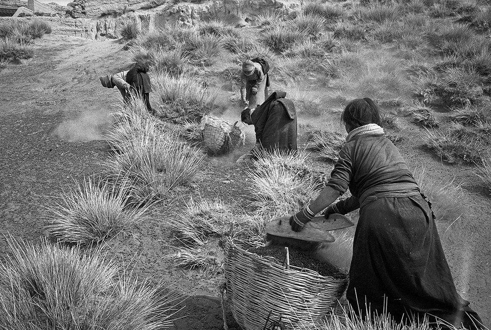 Women picking up sheep droppings, Gansu