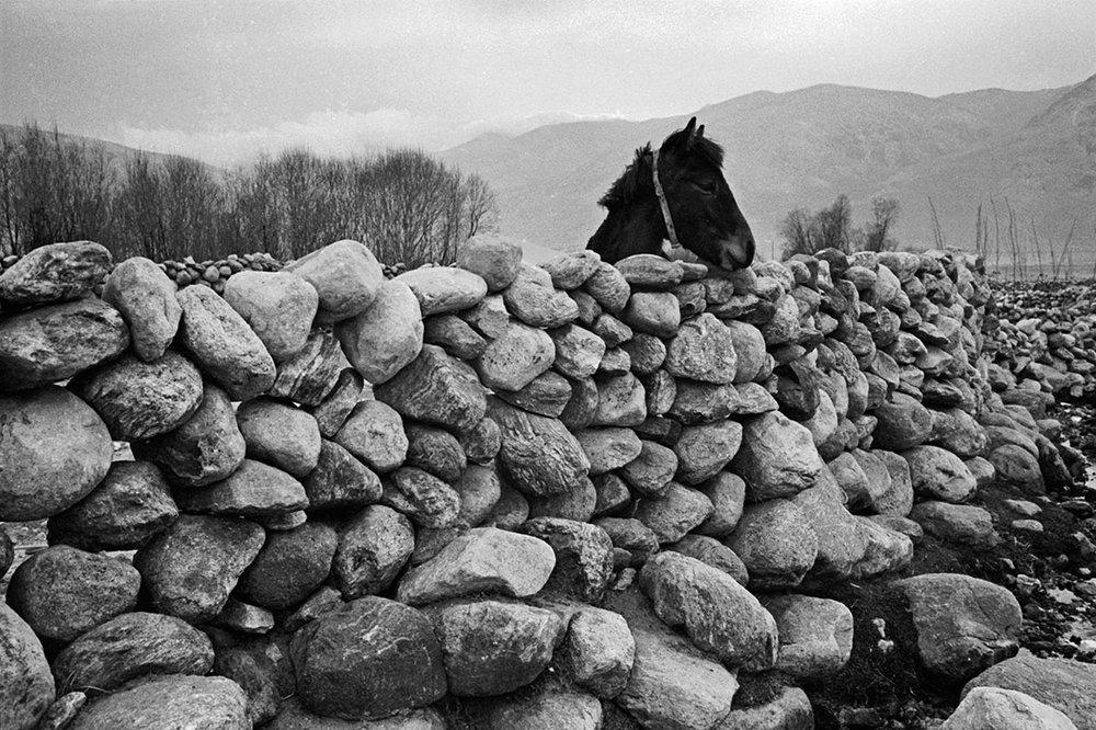 A horse inside a stone fence, Tibet