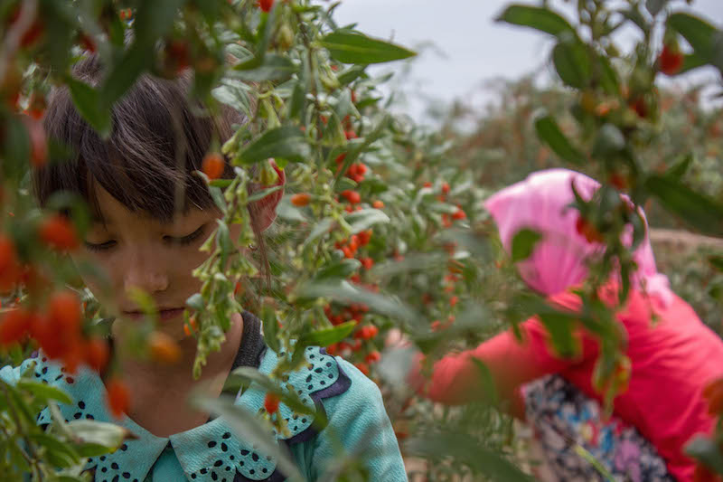 Ma Xin (Hui) - Ladies' Lucky Fruit