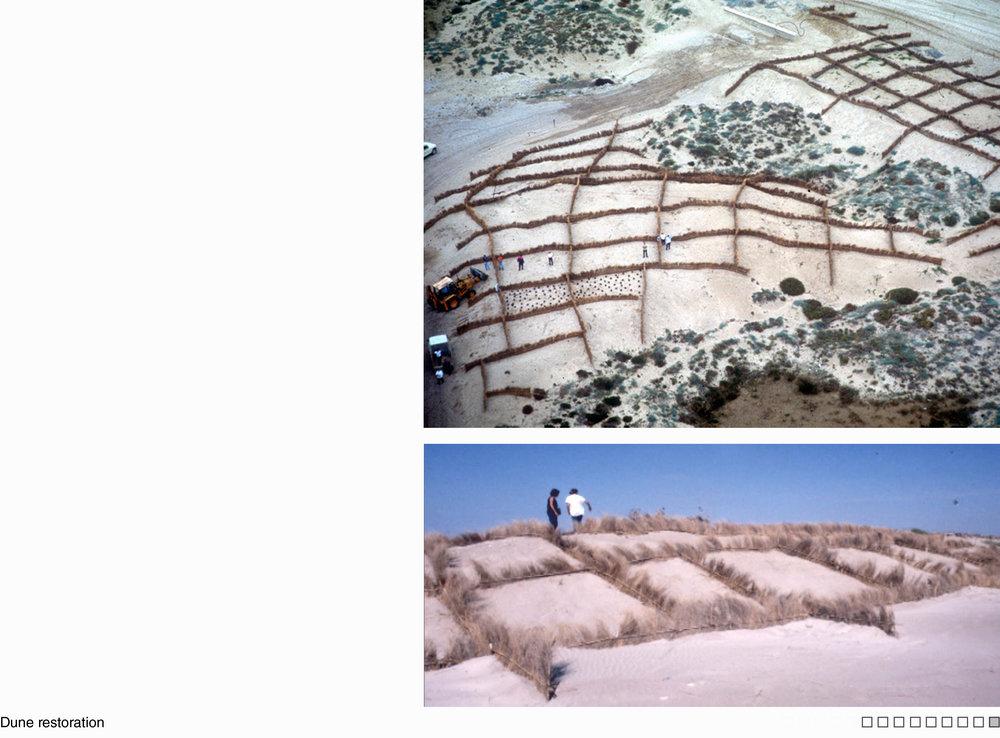 09_SALER_dune restoration.jpg