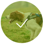 dog-friendly-trail-race-oxfordshire