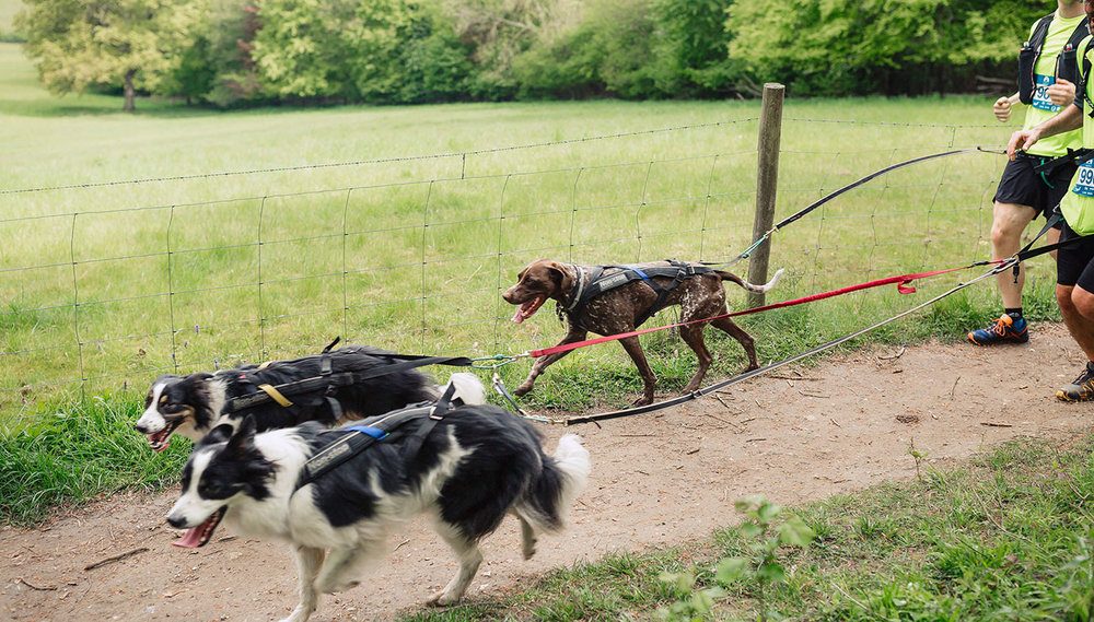 dog-races-3.jpg