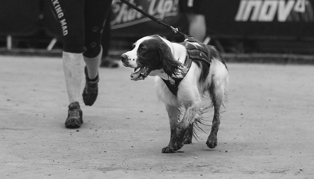 dog-races-11.jpg