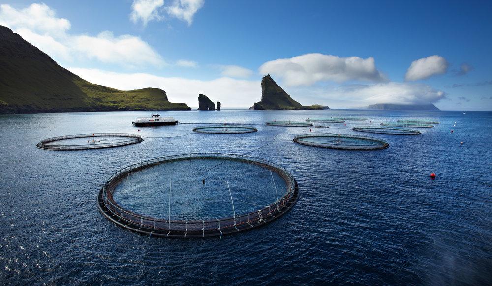 Faroe_salmon2.jpg