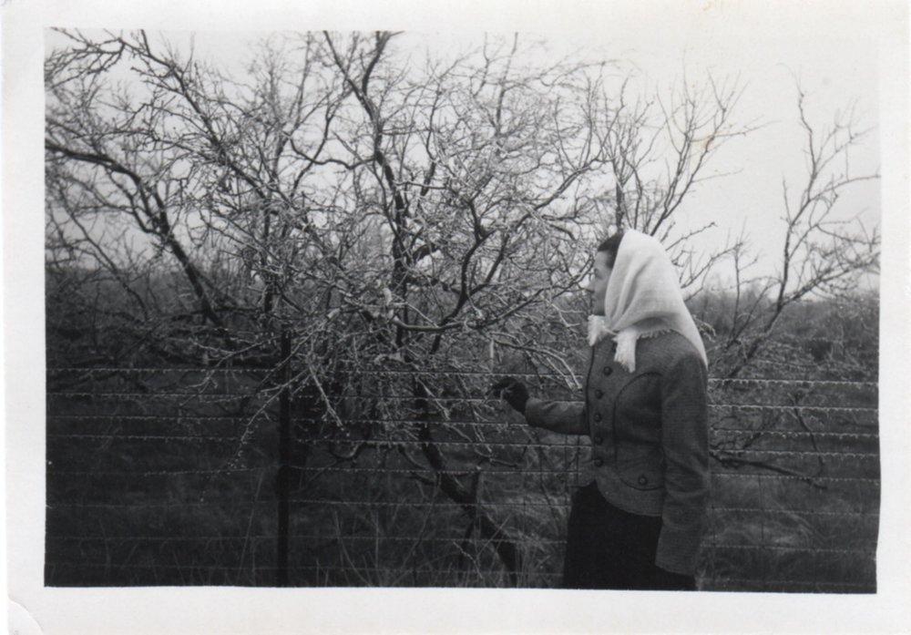 1950s Frosty Vista