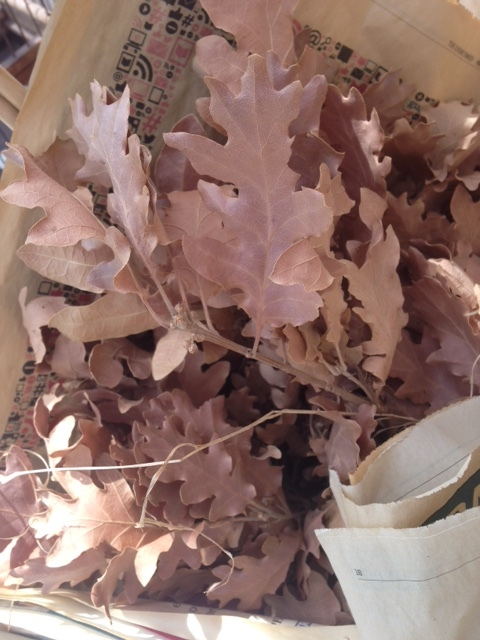 Dried Oak Leaves - Gift Frippery